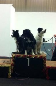 SMkvalat agilitylag 2014, Sheena, Steffo, Oscar och lilla Lollo