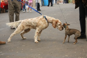 dogs-meeting-for-the-first-time-by-aresauburn